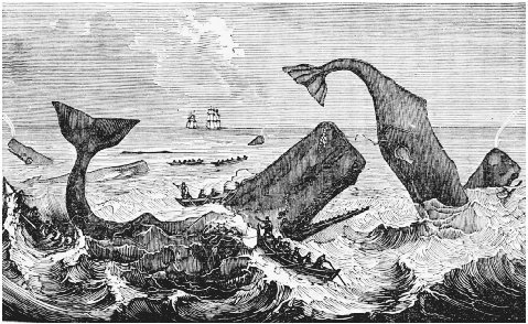 Frontispiece to Thomas Beales Natural History of the Sperm Whale, 1839. Beale was an English physician who wrote his Natural History after serving aboard a whaling vessel. His work has been cited as an influence in Moby-Dick. GETTY IMAGES