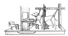 Figure 2 Diagram of Pavlov's Classical Conditioning Experiment. A tube is attached to the dog's salivary duct, and saliva drops into a device that records the number of drops