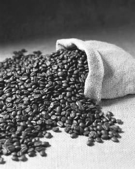It takes 4,000 coffee beans to produce one pound of coffee. That is more beans than the average coffee tree yields in a year. Rene Comet/PictureArts/Corbis.