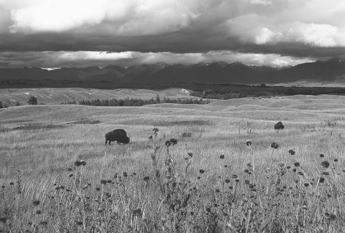 National Bison Range, Montana.  Annie Griffiths Belt/Corbis. Reproduced by permission.