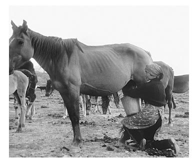 Collecting mare's milk in Tourgut, Kyrgyzstan. PHOTO COURTESY OF GLENN R. MACK.