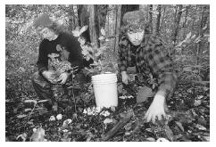 In areas of the country with cool weather and heavy rainfall, mushroom collecting is a full-time occupation. These brothers make a living collecting a variety of mushrooms in Oregon's coastal forests. © DAN LAMONT/CORBIS.
