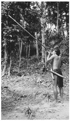 The nomadic Dayak peoples of Borneo hunt with blowpipes and preserve many features of a primitive lifestyle based on hunting and gathering. © CHARLES AND JOSETTE LENARS/CORBIS.