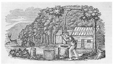 A frontier settler in Potter County, Pennsylvania, is shown using a hominy block for crushing corn to make grits. The pestle is attached to a sapling, which allows for easier pounding. Woodcut, circa 1840. ROUGHWOOD COLLECTION.