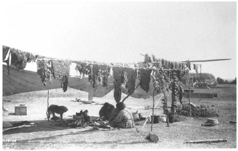 Native American method of drying meat on racks. PHOTOGRAPH BY EDWARD S. CURTIS, 1908. COURTESY OF THE LIBRARY OF CONGRESS.