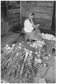 Just as in ancient times, onion growing is still a specialized branch of farming. This onion farmer in Costa Rica is grading the onions in her barn. © CARL & ANN PURCELL/CORBIS.
