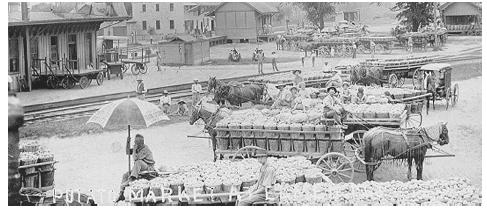The potato market in Elmer, New Jersey, 1907. Note the complete absence of motor vehicles. ROUGHWOOD COLLECTION.