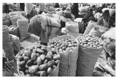 Vendors selling potatoes in the market at Saquisil/l=i'/, Ecuador. Ecuador is home to some of the oldest potato varieties in the New World. © CARL & ANN PURCELL/CORBIS.