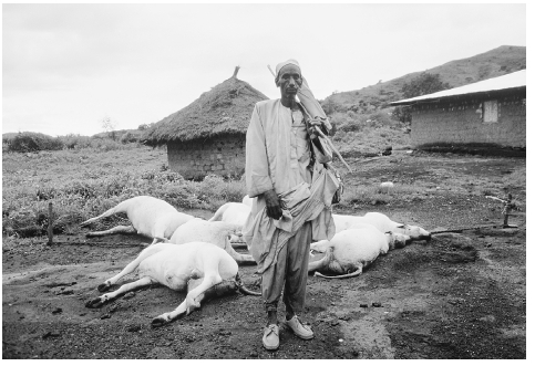 Man with his dead cattle after volcanic activity under Lake Nyos in Cameroon produced a cloud of carbon dioxide that asphyxiated 1,746 villagers and many animals in 1986. PETER TURNLEY/CORBIS