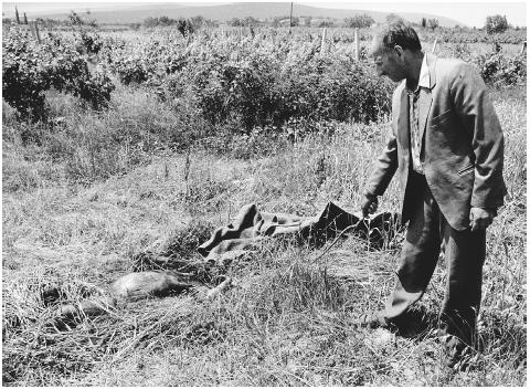 In an overgrown field in Djakovica, Kosovo, the discovery of the remains of an Albanian girl believed to have been raped and then killed by Serbian troops. July 1993. [TEUN VOETEN]