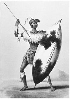 Shaka believed in the total annihilation of his tribal war enemies. When he became Zulu chief, he replaced the javelin (as weapon of choice) with the heavy-bladed thrusting spear. He holds such a spear in this lithograph. [THE GRANGER COLLECTIO