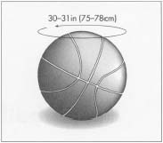 A typical basketball is 30-31 in (75-78 cm) in circumference.