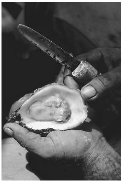 Raw oysters can harbor microbial toxins.