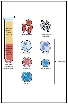 The major components of blood. (Delmar Publishers, Inc. Reproduced by permission.)