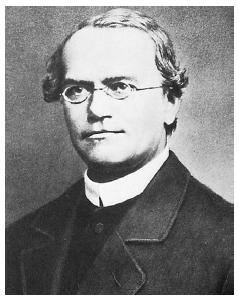 Gregor Mendel. (Archive Photos, Inc. Reproduced by permission.)