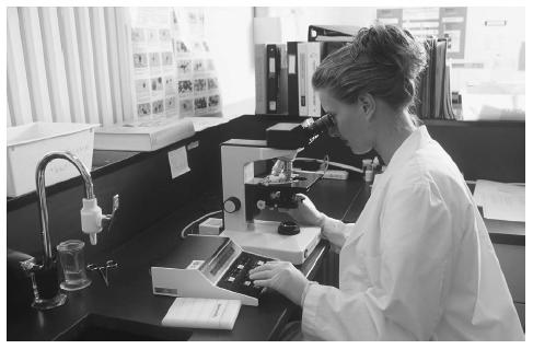 A lab technologist uses a microscope to examine blood films. (Photograph by Carolyn A. McKeone. Science Source/Photo Researchers. Reproduced by permission.)