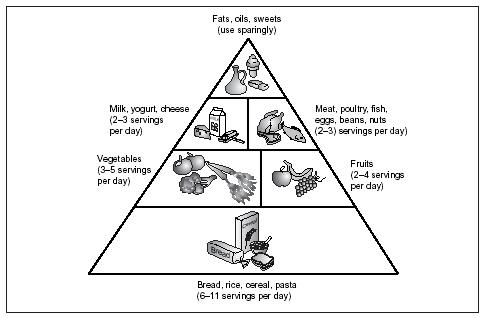 The USDA Food Pyramid. (Illustration by Electronic Illustrators Group. Reproduced by permission.)